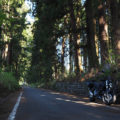 駆け抜ける喜び満点 国道121号線「日光杉並木」