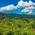幻想的な田園の世界にご招待。新潟県「星峠の棚田」