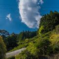 見るからに過酷な崖に茶畑が!? 静岡県「瀬尻の段々茶畑」
